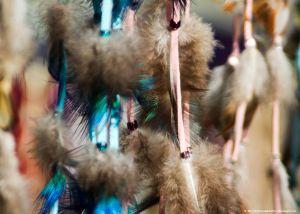 _MG_1019_feathers.jpg