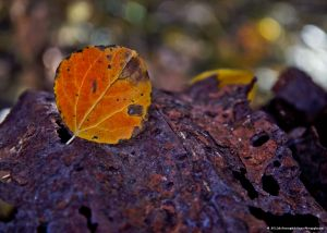 _MG_1632_fallcolor.jpg